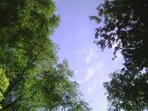 Alberi e cielo Fotografia Stock