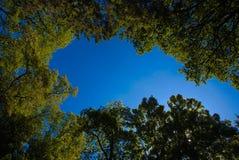 Alberi e cielo blu Fotografie Stock