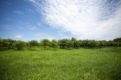 Alberi e cielo blu Fotografia Stock