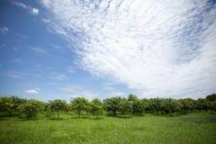 Alberi e cielo blu Fotografia Stock Libera da Diritti