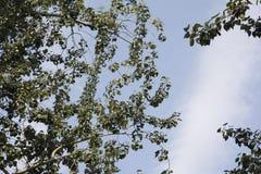 Alberi e cielo blu verdi Fotografie Stock