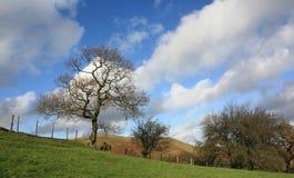 Alberi e cielo Blustery fotografie stock
