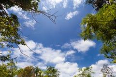 Alberi e cielo del paesaggio Immagine Stock