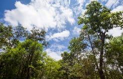 Alberi e cielo del paesaggio immagini stock