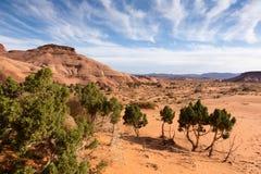 Alberi e cielo del paesaggio del deserto Immagine Stock Libera da Diritti