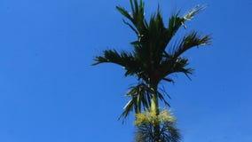 Alberi e cielo dell'areca archivi video