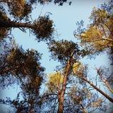 Alberi e cielo della primavera immagine stock libera da diritti