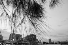 Alberi e cielo della sfuocatura Fotografia Stock Libera da Diritti