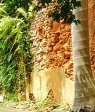Alberi e Clay Walls 2 Fotografia Stock Libera da Diritti
