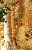 Alberi e Clay Walls Fotografia Stock Libera da Diritti