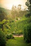 Alberi e colline della natura Piantagione di tè La Sri Lanka Immagine Stock