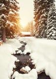 Alberi e corrente innevati scenici nella foresta di inverno dopo le precipitazioni nevose fotografie stock