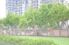 Alberi e costruzione Fotografia Stock