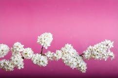 Alberi e fiori del fiore Bella vista della natura della molla su un fondo viola Concetto degli alberi della molla e delle stagion Fotografia Stock