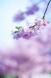 Alberi e fiori del fiore in un parco Bella vista della natura della molla con la gente Alberi e luce solare Scena del giorno sole Immagini Stock Libere da Diritti