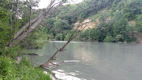 Alberi e fiume Immagini Stock