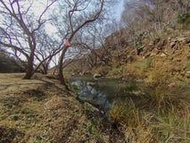 Alberi e fiume di autunno Immagine Stock