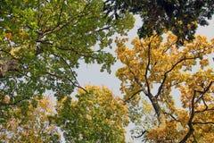 Alberi e fogli d'autunno   fotografie stock