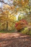 Alberi e foglie di autunno nella campagna britannica Immagine Stock
