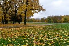 Alberi e foglie gialli sull'erba verde fotografie stock