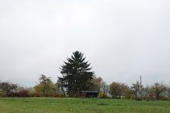 alberi e foglie nebbiosi di autunno Fotografia Stock