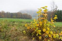 alberi e foglie nebbiosi di autunno Immagine Stock Libera da Diritti