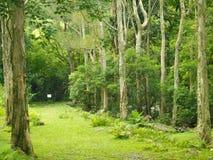 Alberi e foresta Fotografia Stock