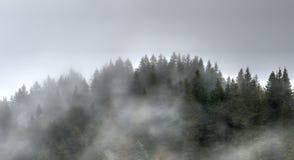 Alberi e foresta nella nebbia e nella foschia nelle colline della Svizzera Immagini Stock Libere da Diritti