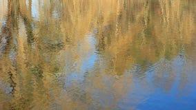 Alberi e lago stock footage