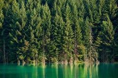 Alberi e lago di pino Immagine Stock Libera da Diritti