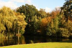 Alberi e luce solare del fiume durante la caduta Fotografie Stock