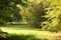 Alberi e luce solare durante il fall2 Fotografia Stock Libera da Diritti