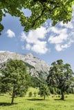Alberi e luce solare nelle alpi Hinterriss dell'Austria Immagine Stock