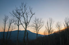 Alberi e montagna di inverno al tramonto Immagini Stock Libere da Diritti