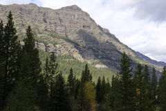 Alberi e montagna sempreverdi Immagini Stock Libere da Diritti