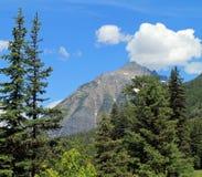 Alberi e montagna sempreverdi sotto un cielo blu Fotografia Stock