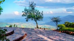 Alberi e montagne Fotografie Stock Libere da Diritti