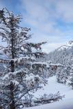 Alberi e montagne della neve Immagini Stock Libere da Diritti