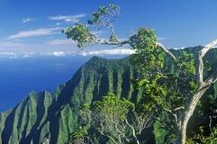 Alberi e montagne sulla linea della costa del Na Pali, Kauai, Hawai Fotografia Stock Libera da Diritti