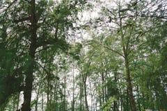 Alberi e natura verdi della foresta della pianta della foglia Immagini Stock Libere da Diritti