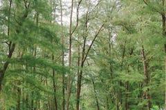 Alberi e natura verdi della foresta della pianta della foglia Immagini Stock