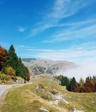 Alberi e nebbia fotografie stock libere da diritti