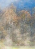 Alberi e nebbia fotografia stock
