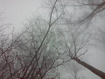 Alberi e nebbia fotografia stock libera da diritti