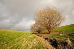 Alberi e nube Immagine Stock