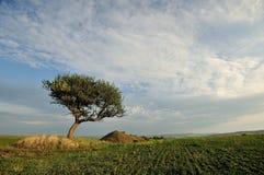 Alberi e nube Fotografie Stock Libere da Diritti