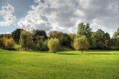 Alberi e paesaggio della foresta. Immagini Stock