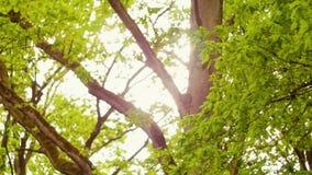 Alberi e palme verdi contro cielo blu ed il sole brillante Concetto della natura di vacanza di viaggio Cerchi la vista in foresta stock footage