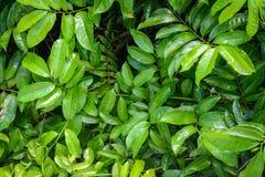 Alberi e pianta verdi della foglia Fotografia Stock Libera da Diritti