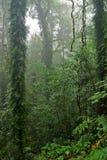 Alberi e piante della foresta pluviale fotografia stock